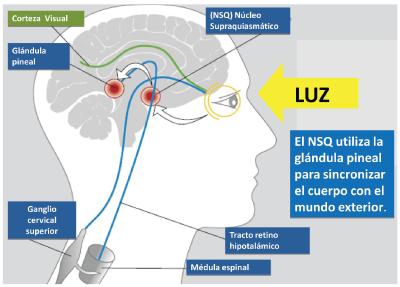 lu121_uba_los_efectos_visuales_y_biologicos_de_la_luz_4